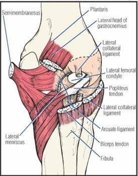 Posterolateral corner of the knee